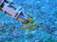 Submersible Arm Collecting Algae