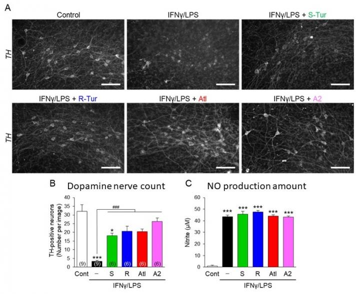 Effects of ar-turmerne derivatives on IFNγ/LPS-induced dopaminergic neurodegeneration in rat midbrain slice cultures