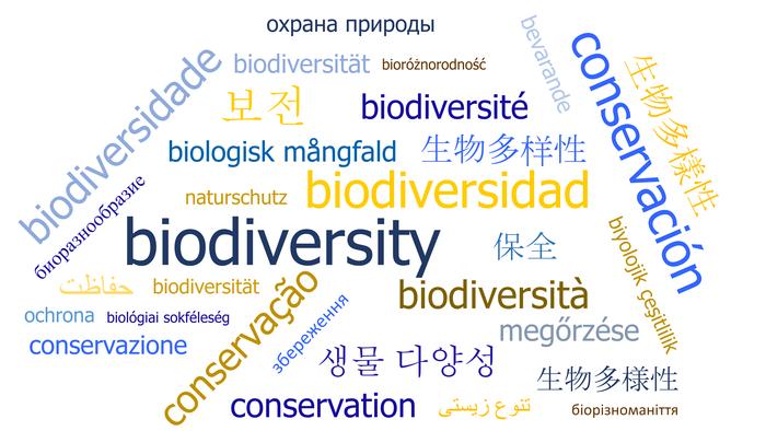 Nicht-englische Wissenschaft kann helfen, die Biodiversität zu retten