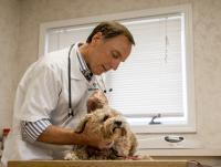 Photo of Dr. Mark Carlson Examining a Dog