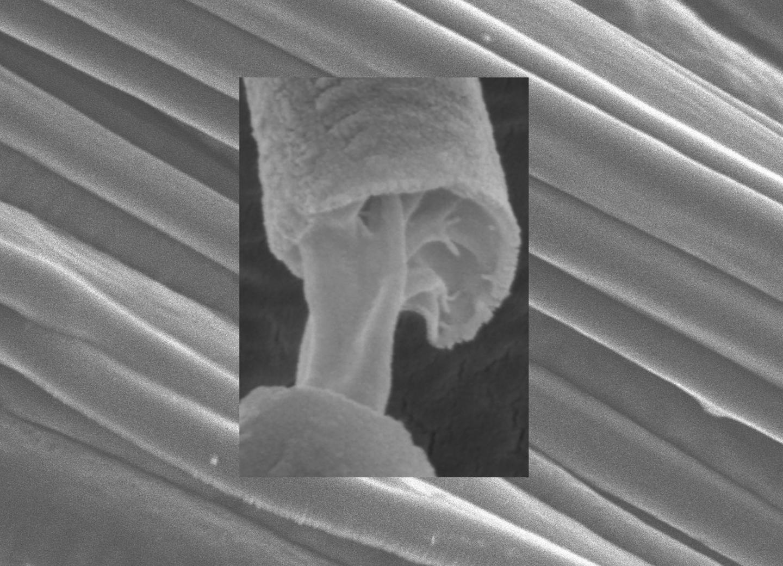 Aligned Core-Sheath Fiber Arrays Mass-Produced by Pressurized Gyration